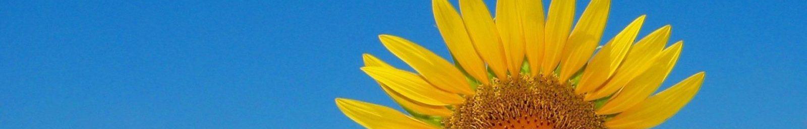 Zahradnictví Slunečnice
